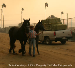 The Del Mar Fairgrounds is taking animals evacuated due to the wildfires