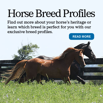 Horse Breed Profiles
