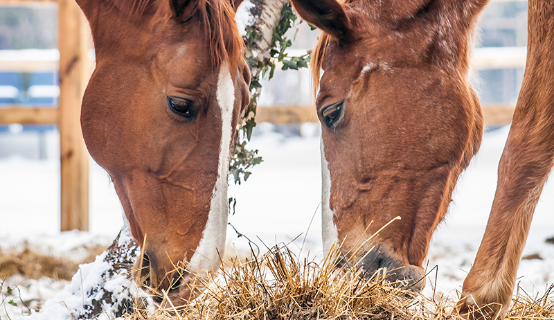 3 Reasons To Adjust Your Horse's Diet This Winter