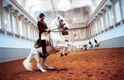 Lipizzan stallions carry out centuries of tradition with the Spanish Riding School in Vienna.