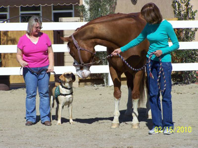 Life with Horses - Wally Does Some Volunteer Work