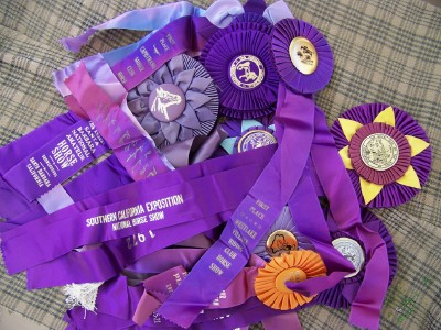 Purple ribbons