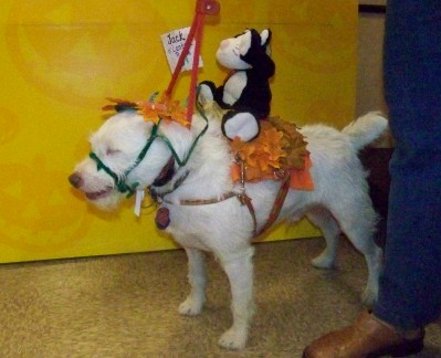 Life with Horses - Halloween Comes to the Horse World