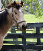 Once a horse has its adoption papers filled out by someone, they are saddled up by potential owners