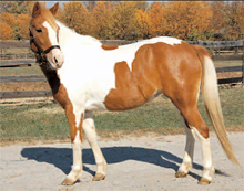 KyEHC Horse of the Week: Dixie Cup