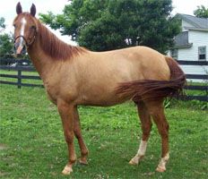 KyEHC Horse of the Week: Shadow
