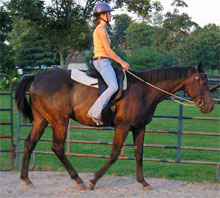 KyEHC Horse of the Week: Investigator