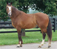 KyEHC Horse of the Week: Legend