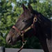 Horse of the Week: Rambo