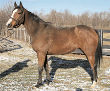 KyEHC Horse of the Week: Spurt
