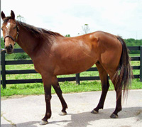 KyEHC Horse of the Week: Easy Going