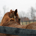 Identifying Equine Neglect