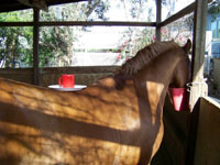 Life with Horses - Wally Comments on His Diet