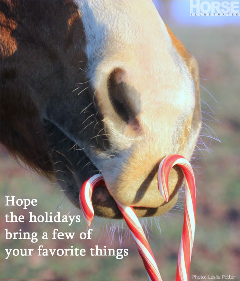 Share horses on Facebook for Christmas, Hanukkah and New Year\'s Day ...