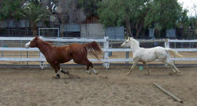 Cowboy and Wally gallop