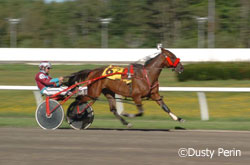 Harness racing action shot