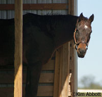 The KyEHC opened in 2007 as a rescue for horses who no longer had owners