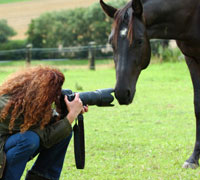 2009 Spirit of the Horse Photo Contest