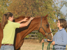 Take some time to pamper you and your horse with a spa treatment