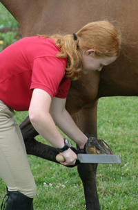 Examine the shoe-less hoof and file down any sharp pieces if necessary