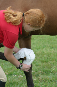 Use a diaper to cover the unprotected hoof, placing the padding over most of the hoof