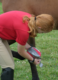 Treating a Hoof Abscess Step 4