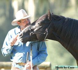 Build the relationship with your horse in 10 minutes a day
