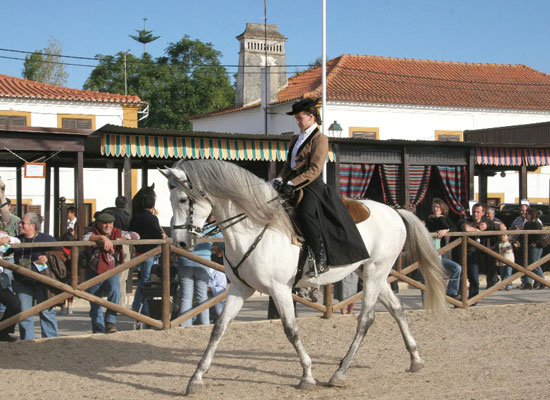 Beautiful horses and their riders at the Feira Nacional do Cavalo