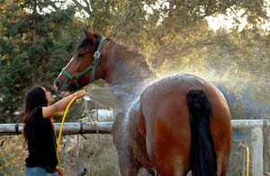 Knowing when it is safe to work your horse is important to avoiding a heat-related illness
