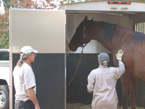 R Hay and Grain was greatly helpful when they sent a trailer for Micaela's horses
