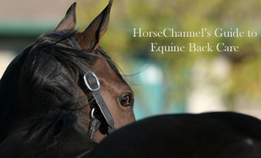 Equine Back Care Guide