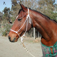 Make Your Own Rope Halter Step 7