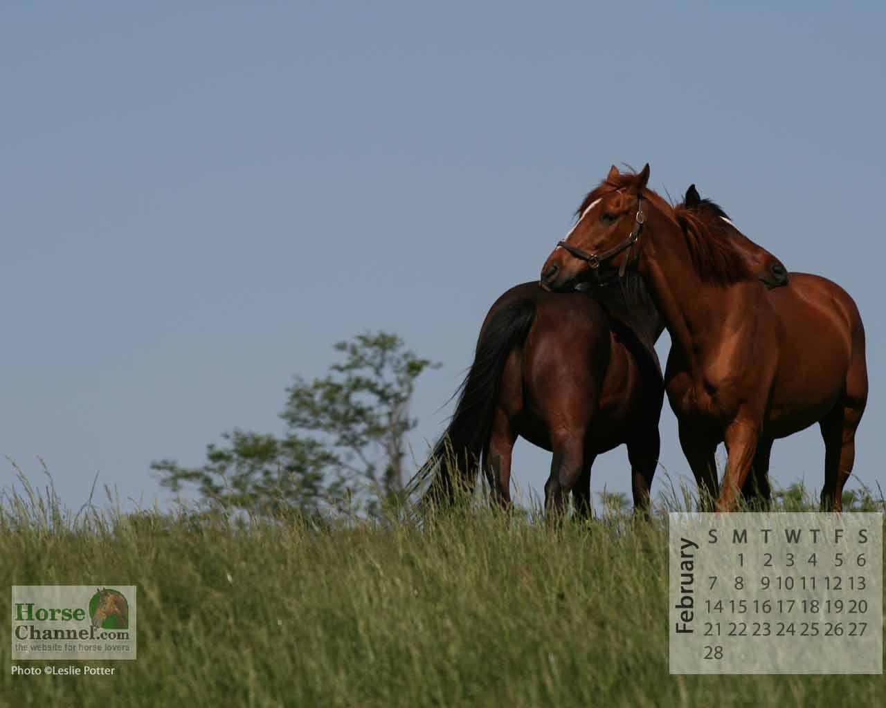Horse Calendar Wallpaper Horse Illustrated Images, Photos, Reviews