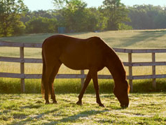 Helping you pick the right horse fence material