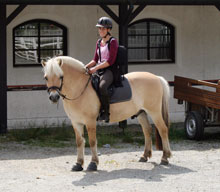 Micaela Myers shares her stories of riding with Norwegian Fjord Horses