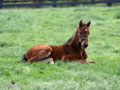 Springtime Foal Wallpaper 3