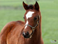 Springtime Foal Wallpaper 4