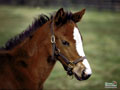 Springtime Foal Wallpaper 5