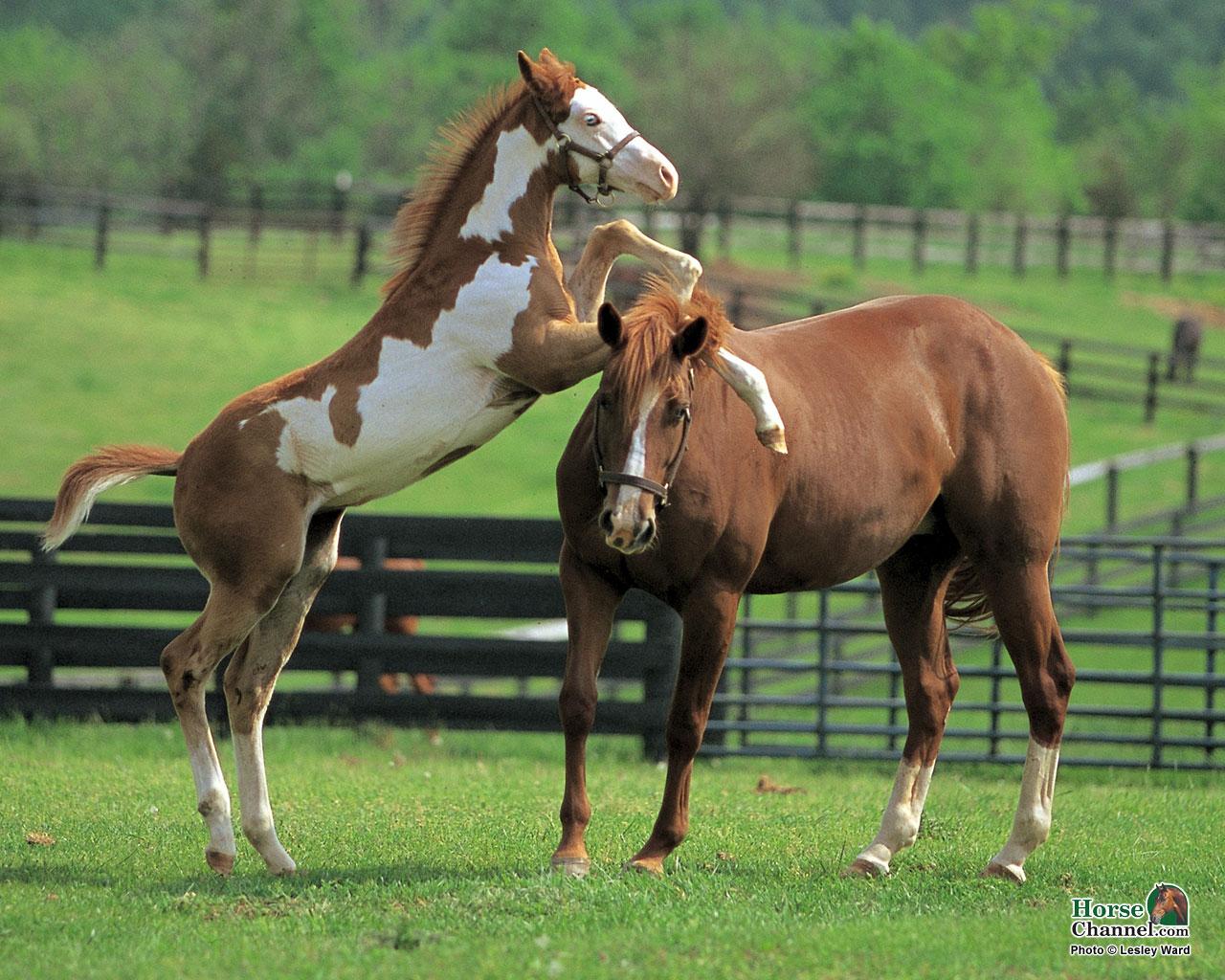 Springtime Foal Screensaver And Desktop Wallpapers Horse Illustrated