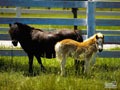 Springtime Foal Wallpaper 8