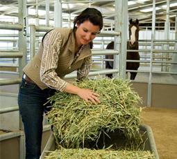 Tips for finding your highest quality hay