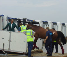 Horse being loaded for flight