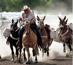 The annual Bishop Mule Days Celebration has taken place the week of every Memorial Day since 1969