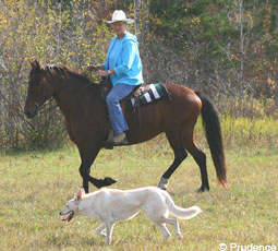 Almost any dog can learn to be a great equine companion