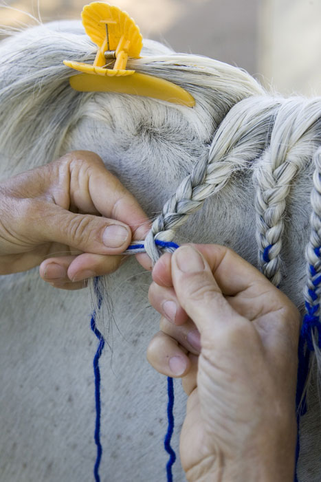 Horse Mane Braiding Step 5
