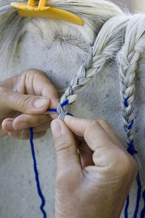 Horse Mane Braiding Step 7