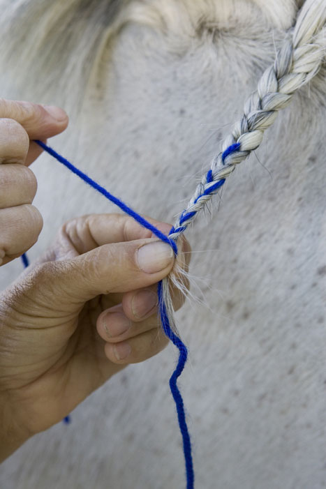 Horse Mane Braiding Step 8