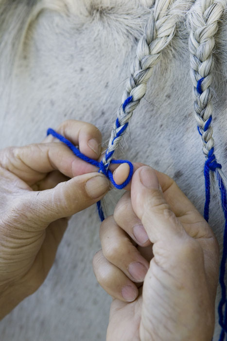 Horse Mane Braiding Step 9