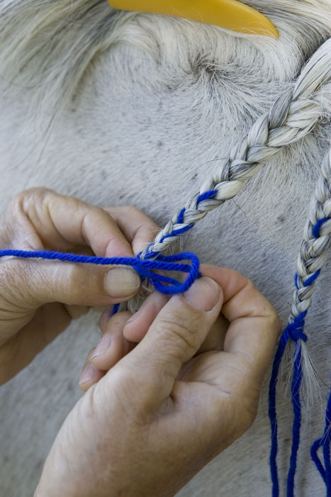 Horse Mane Braiding Step 10