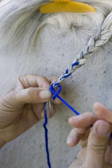 Horse Mane Braiding Step 12